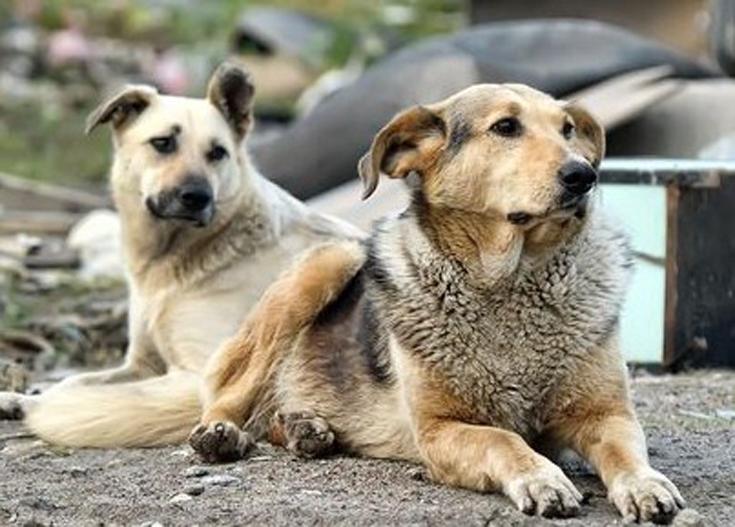 Empoli: donna lascia in eredità un milione di euro per i cani randagi
