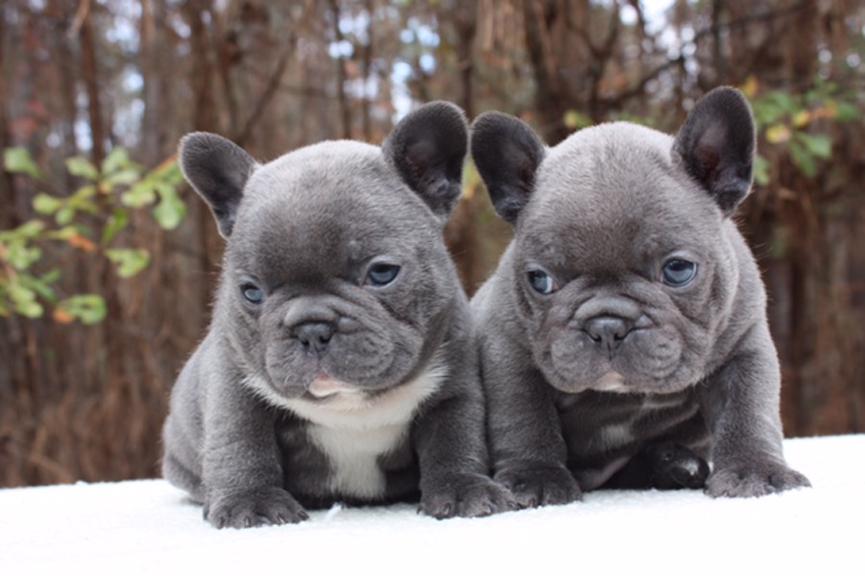 Due cucciolo di cane nella neve