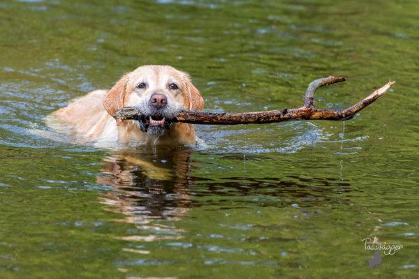 divertimento per il cane