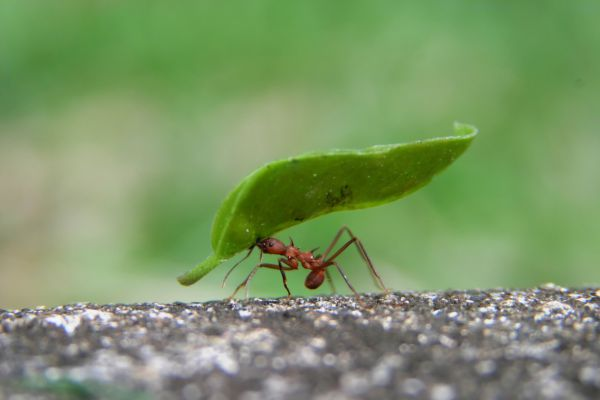 Il cane ha mangiato le formiche, è pericoloso?