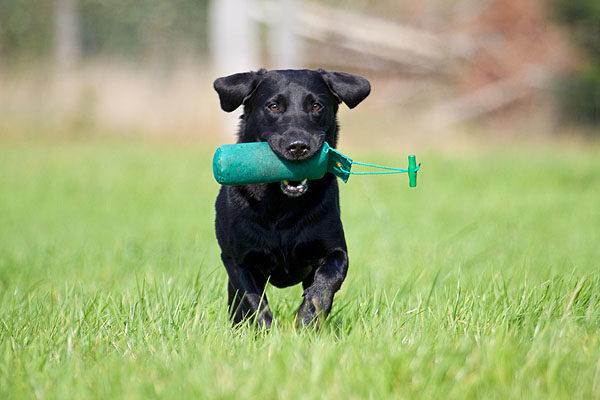 Rimettere in forma il cane: i consigli per una vita sana