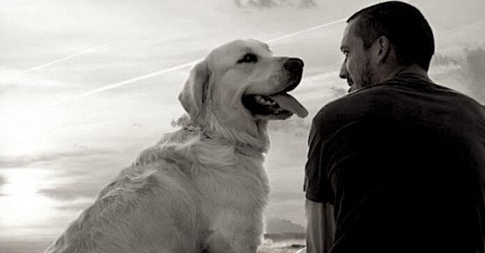 Un cane ed un uomo si guardano