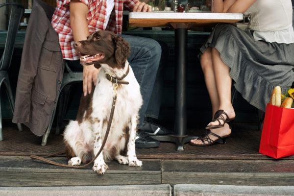 Accessori per cuccioli di cane: quali sono?