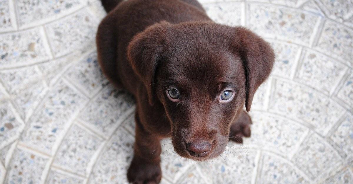 un cucciolo che guarda