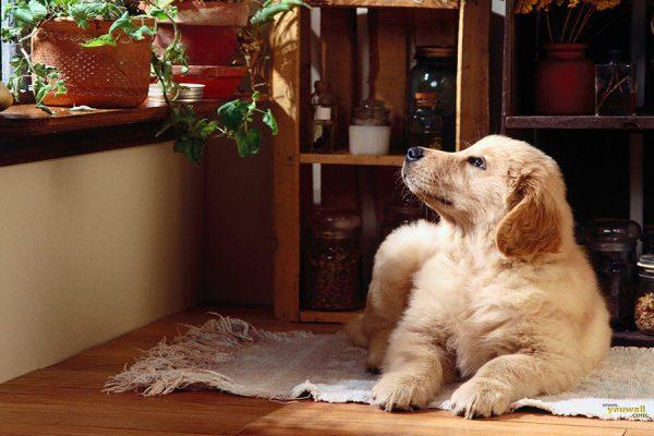 Addestrare un cucciolo: le prime 8 cose da fare