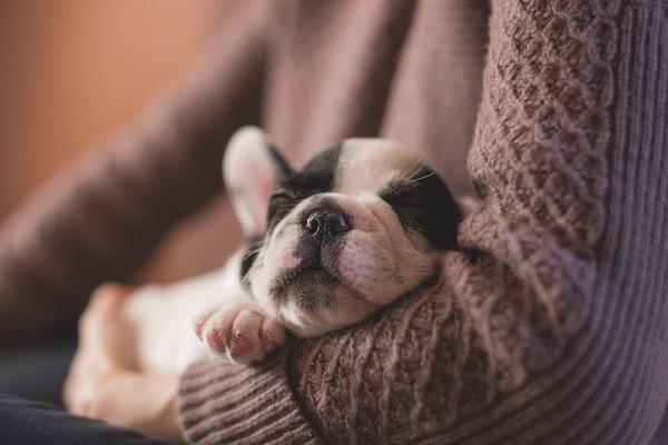 cane addosso che cerca calore