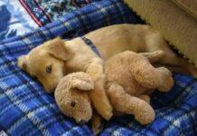 cane abbraccia un peluche