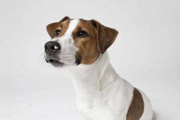 Aiutare un cane con le convulsioni: norme di primo soccorso