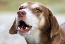 cane che ulula
