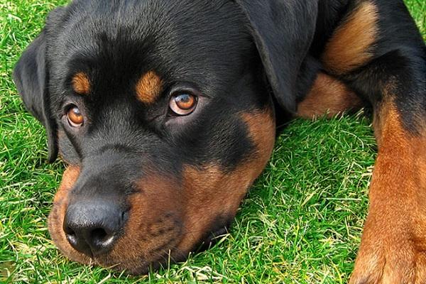 cane accucciato