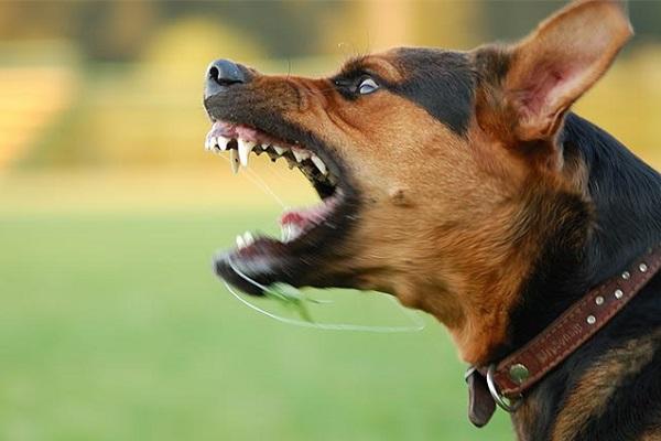 cane che sta attaccando