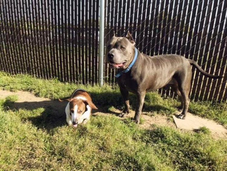 Due cani inseparabili vengono adottati ma poi accade l'impensabile