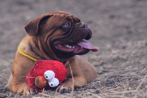 cosa fare se il cane ti porta regali