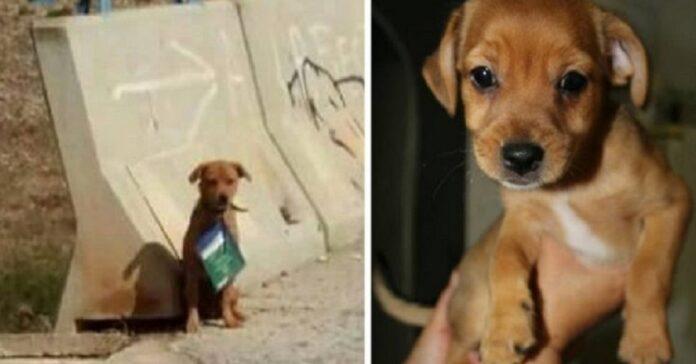 cane-abbandonato-con-il-libretto-delle-vaccinazioni-al-collo