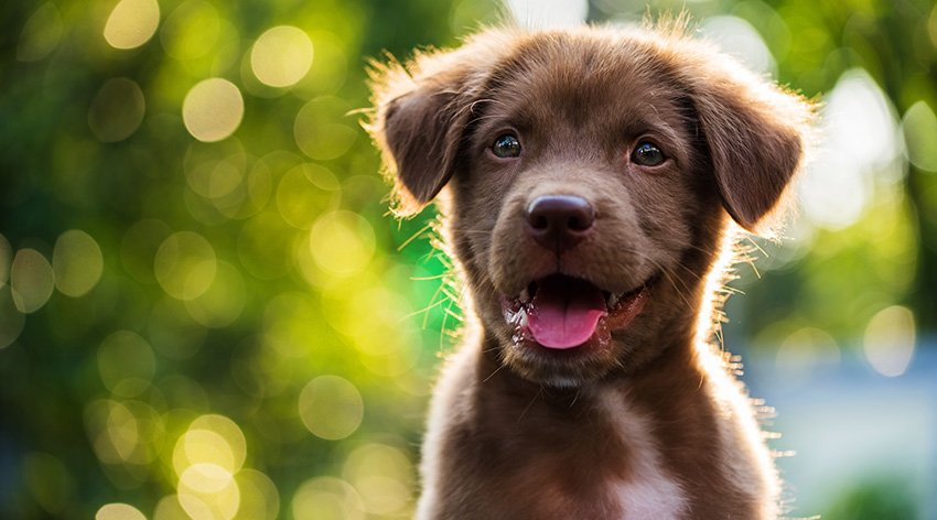 cane-adottato-felice