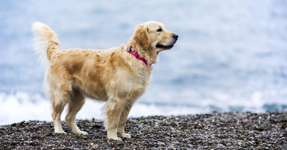 cane che non sa nuotare