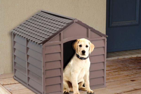 cane e casetta