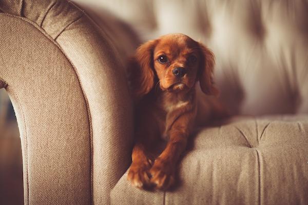 10 modi per rendere confortevole la casa per il tuo cane