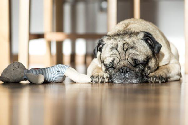 Il cane lascia i giocattoli davanti alla porta, come mai? (VIDEO)