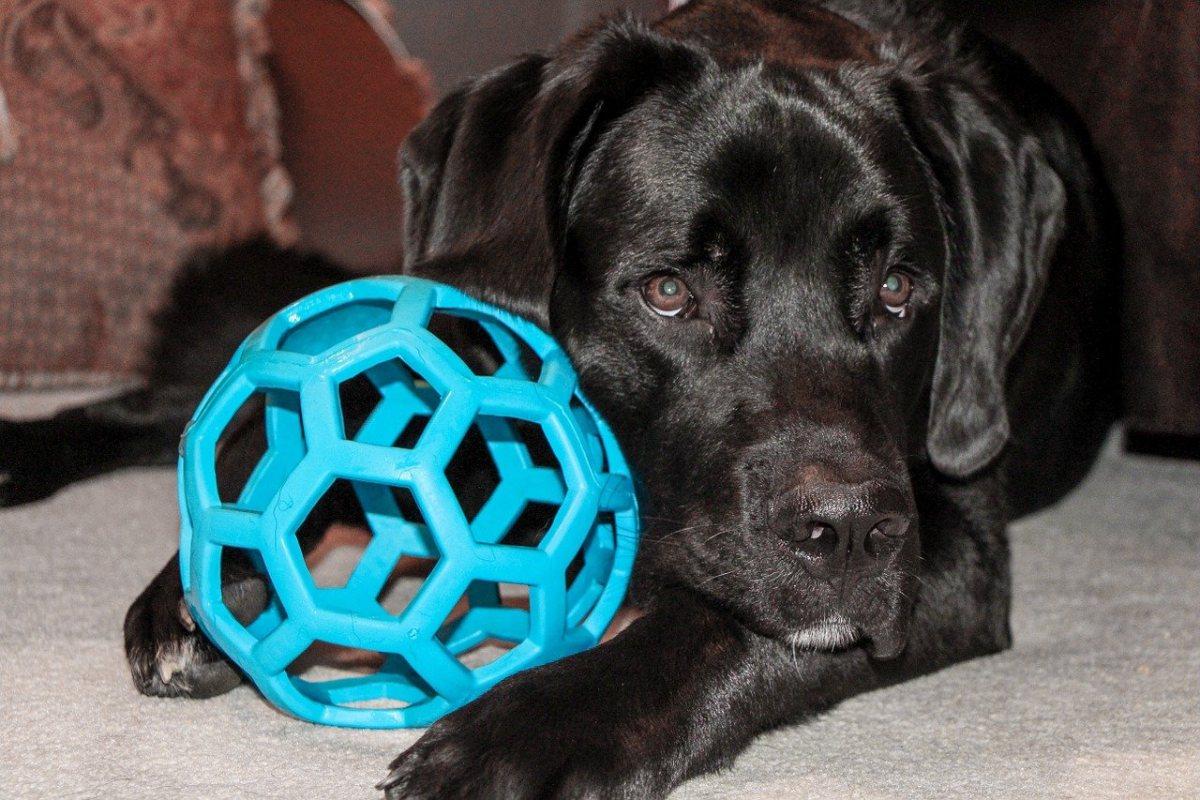 cane con una palla di plastica azzurra