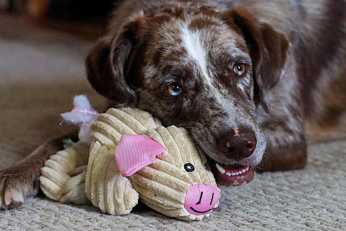cane che gioca con un pupazzo