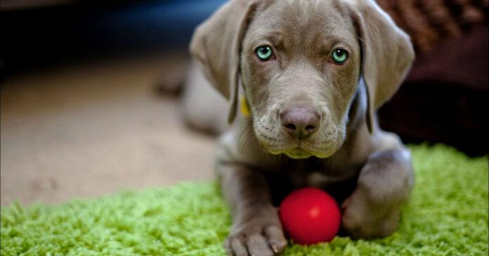 cucciolo di cane comportamenti