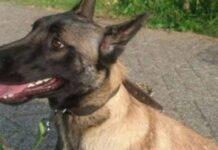 cane-salvato-ripaga-i-soccorritori-con-un-sorriso-strabiliante