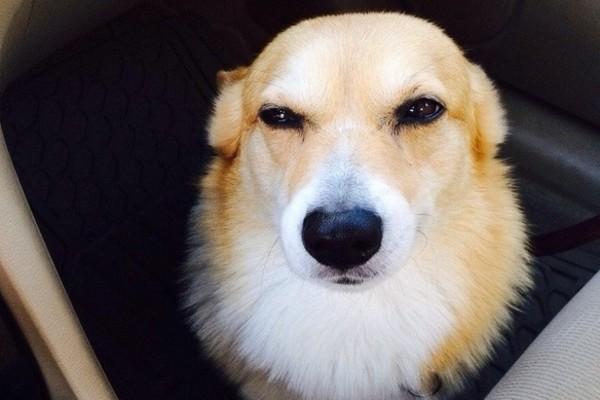 cane sospettoso
