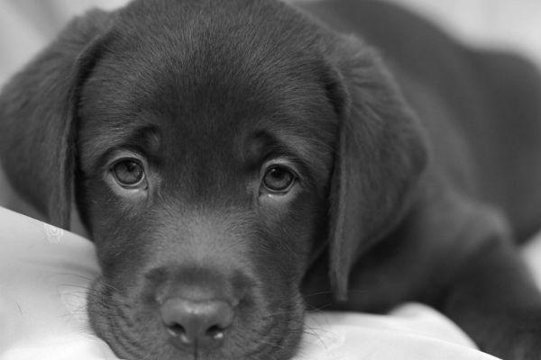 I cani capiscono la morte degli altri cani?