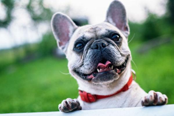 Cani che richiedono poca toelettatura: 7 razze da conoscere
