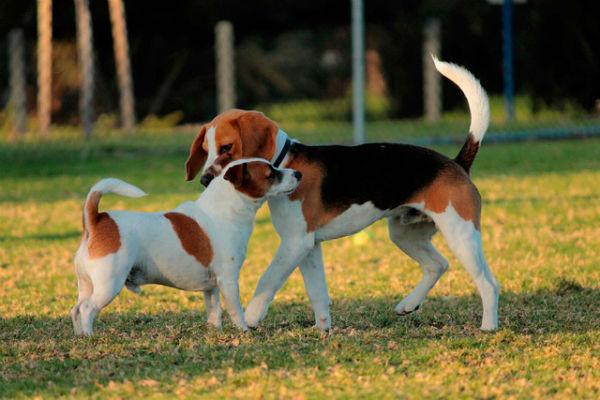 7 razze di cani con problemi allo stomaco