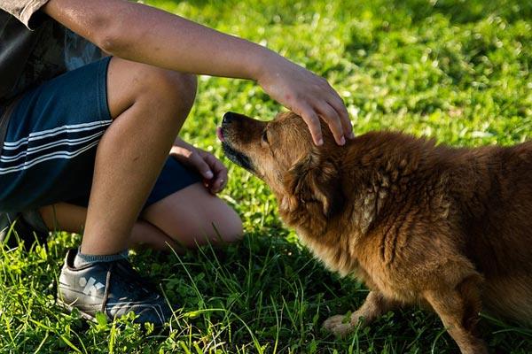 Cani e paura umana: come reagiscono quando siamo spaventati?