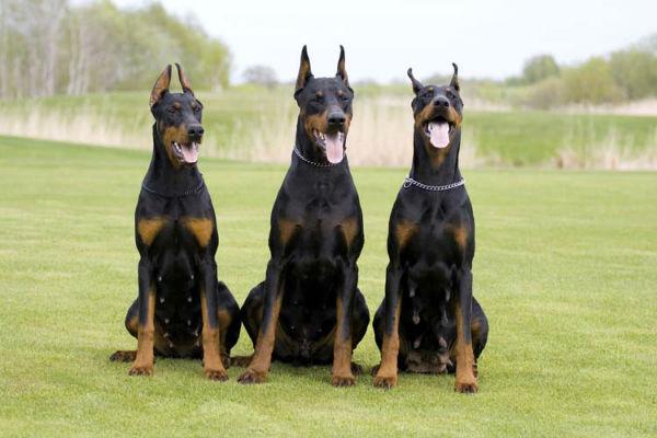 tre cani seduti