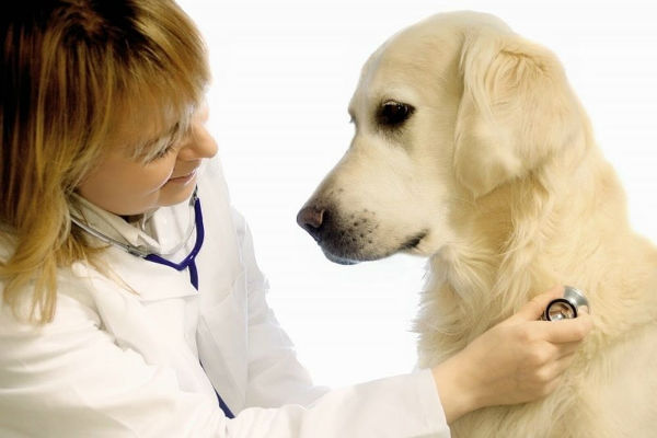 Asistolia nel cane: sintomi, cause, diagnosi e cura