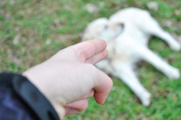 padrone e cane