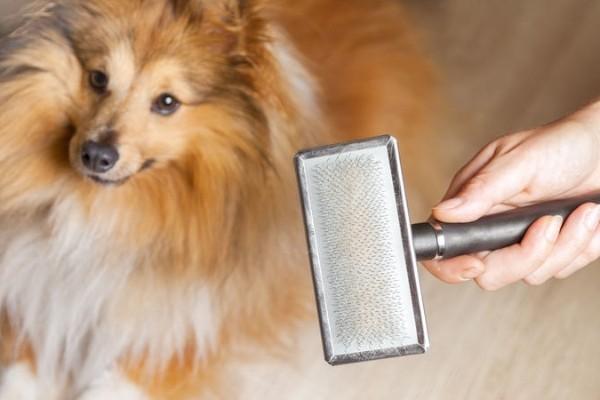 cane guarda la spazzola