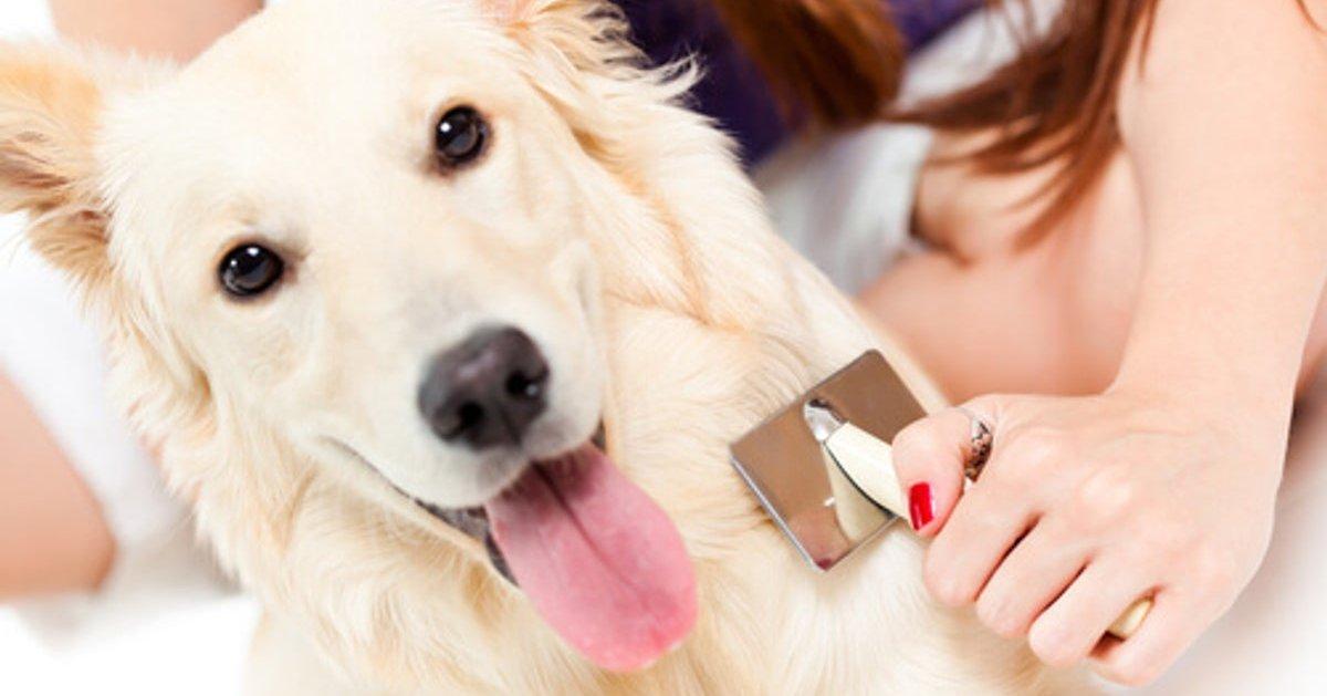 cane che viene spazzolato