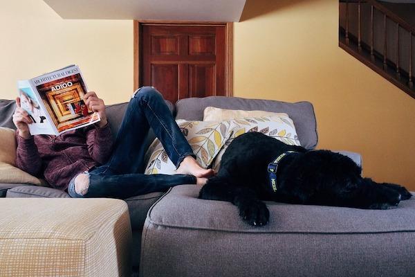 organizza gli spazi domestici per il tuo cane