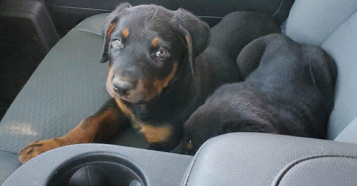 cuccioli-abbandonati-per-strada-salvati-da-un-lavoratore