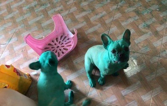 cuccioli-verdi