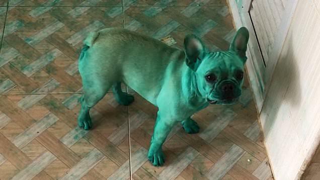 cucciolo-verde