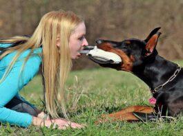 Tiro alla fune con il cane: come giocarci in modo sano e divertente