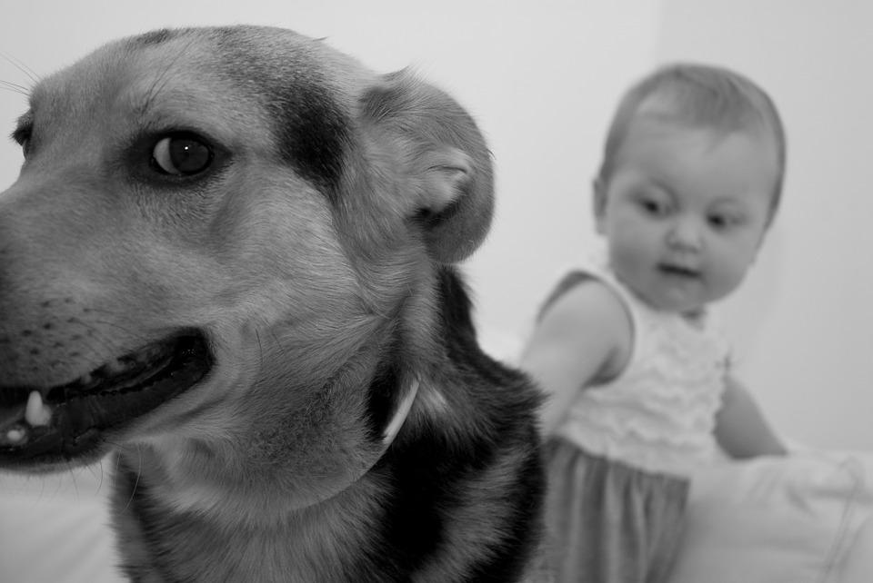 Sii sempre presente tra cane e nuovo bambino