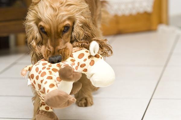 Come non far giocare il cane con i giochi dei bambini