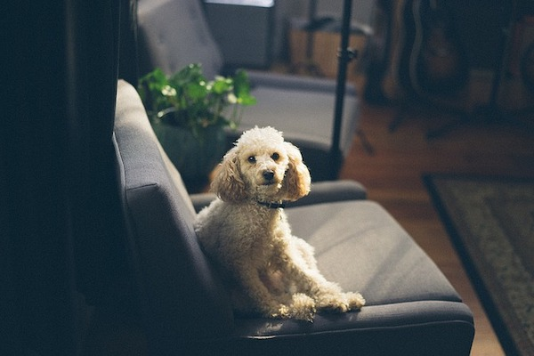cane è seduto come un umano, è segno di dominazione