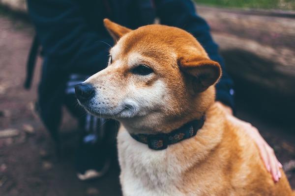 Perché i cani si arrabbiano o si offendono?