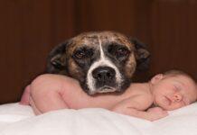 Cane e nuovo bambino: come farglielo accettare