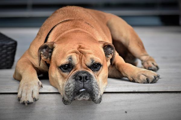 il cane si può offendere o arrabbiare con noi?
