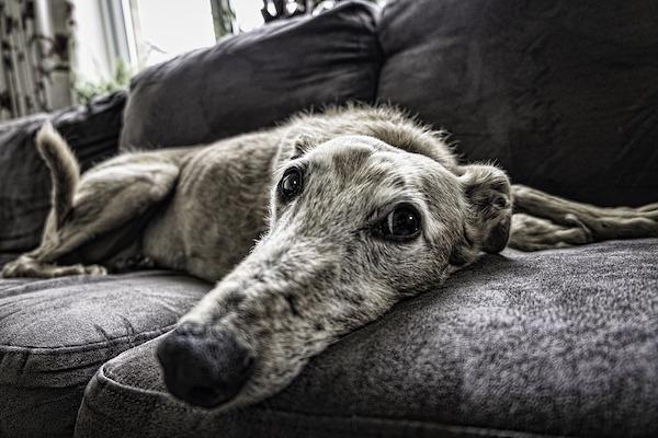 Cane in casa in affitto