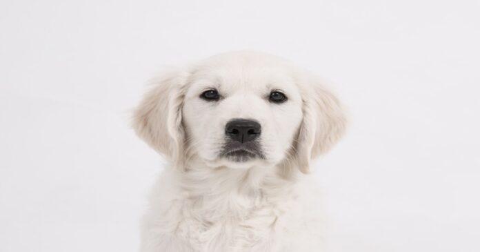 Il cane si siede sulla tua testa? Ecco tutti i motivi per cui lo fa